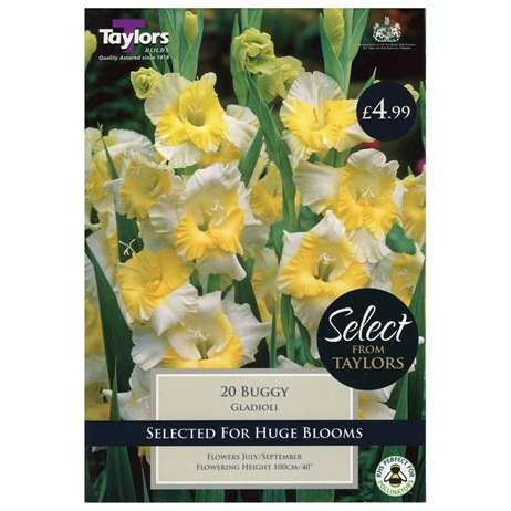 Taylors Bulbs Gladioli Buggy (20 Pack) (SSE105)