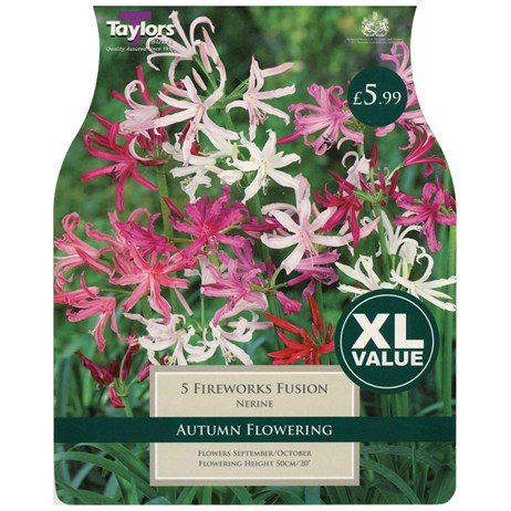 Taylors Bulbs Nerine Fireworks Fusion (5 Pack) (XL576)