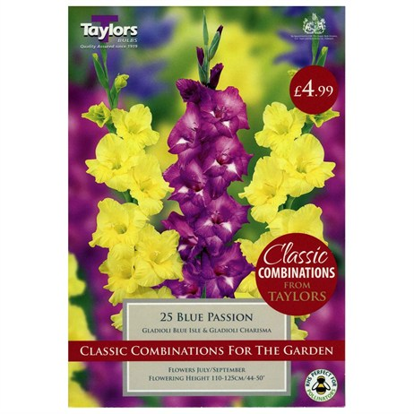Taylors Bulbs Gladioli Blue Passion (25 Pack) (CC625)
