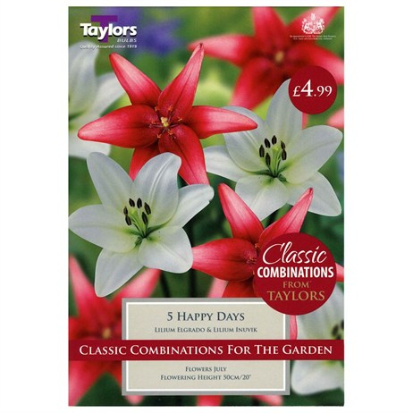 Lilium Happy Days (Pack of 5) - Taylors Bulbs (CC631)