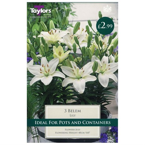 Taylors Bulbs Lily Belem (3 Pack) (TS575)