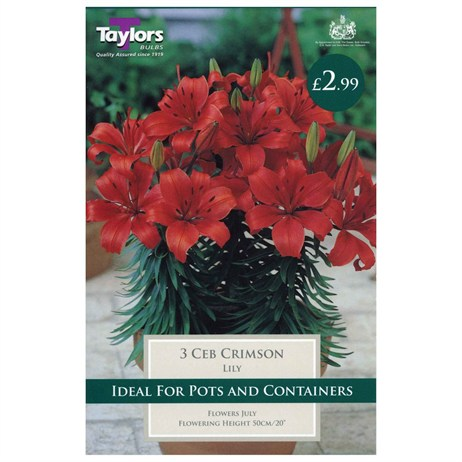 Lily Ceb Crimson (Pack of 3) - Taylors Bulbs (TS588)