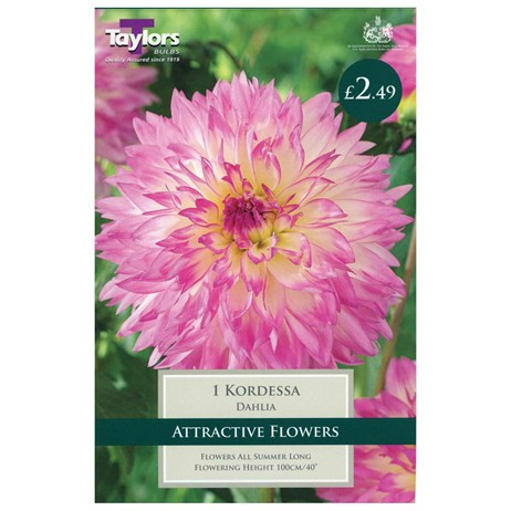 Taylors Bulbs Dahlia Kordessa (Single Pack) (TS340)