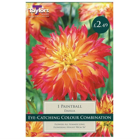Dahlia Paintball (Single) - Taylors Bulbs (TS400)