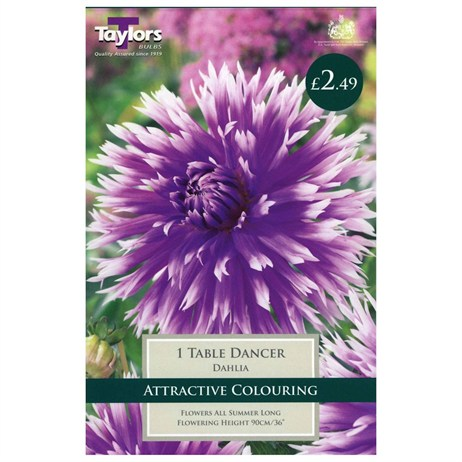 Taylors Bulbs Dahlia Table Dancer (Single Pack) (TS411)