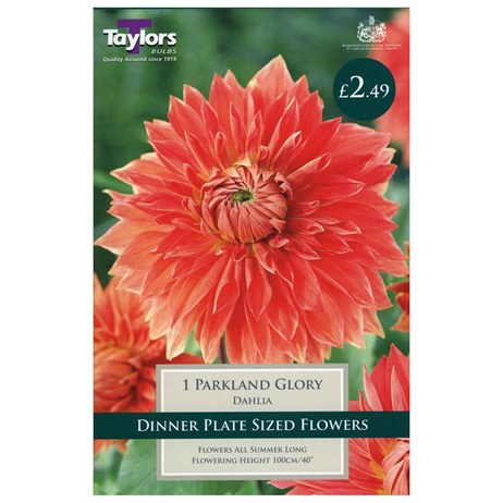 Dahlia Parkland Glory (Single) - Taylors Bulbs (TS371)