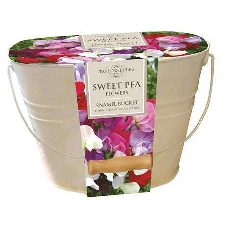 Sweet Pea Oval Planter - Taylors Bulbs (SH35)