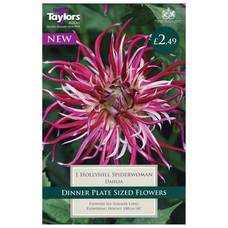 Taylors Bulbs Dahlia Hollyhill Spiderwoman (Single Pack) (TS390)