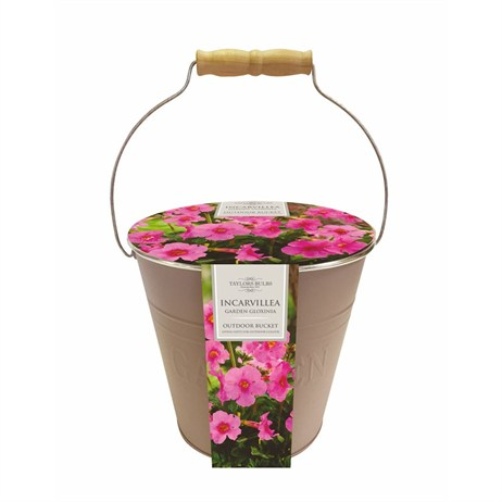 Outdoor Metal Bucket Incarvillea Delavayi (Single) - Taylors Bulbs (EB20)