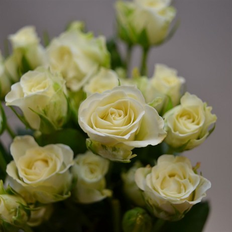 Spray Rose (x 5 stems) - White