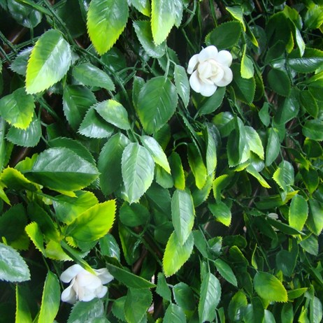 WitchHedge Summer Extendable Hedging 1m x 2m (SEXTHD)