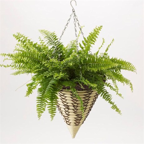 Triflora Luxury 12inch Hanging Basket Cone (BW00101)