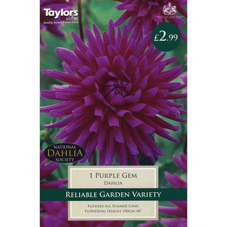 Taylors Bulbs Dahlia Purple Gem (Single Pack) (TS313)