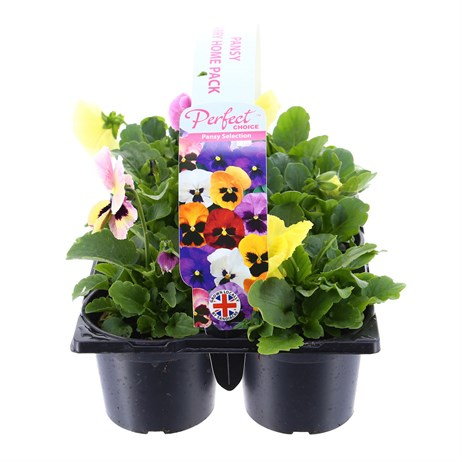 Carry Home Pack - Pansy Mixed - 6 x 10.5cm Pot Bedding