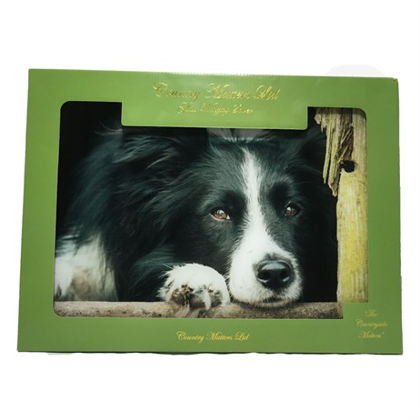 Country Matters Collie Chill Out Glass Worktop Savers (CMGWS0130)