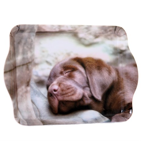 Country Matters Pup On Boot Trinket Trays (CMTT0101)