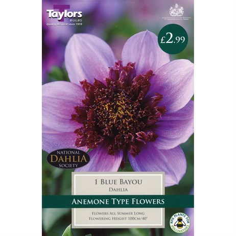 Taylors Bulbs Dahlia Blue Bayou (Single Pack) (TS418)