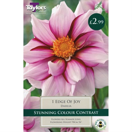 Taylors Bulbs Dahlia Edge Of Joy (Single Pack) (TS416)