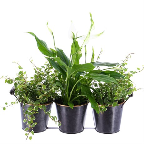 Houseplant Set of 3 Planter in Container