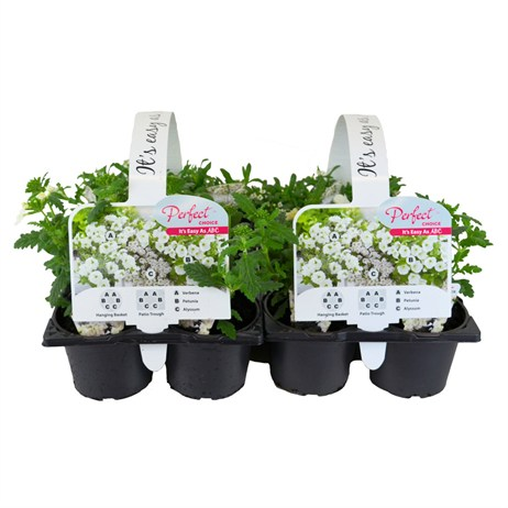 It's Easy As ABC Plant Mixed Set of 2 - White