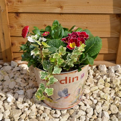 Jardin Bucket Mother's Day Outside Planter
