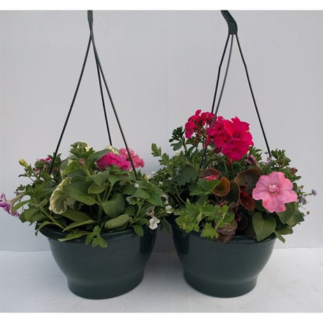 Mixed Seasonal Hanging Baskets in Green (25cm) - Set of 2