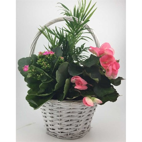 Mother's Day Planted Arrangements - Design 2