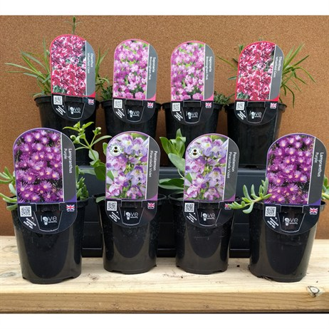Pink Selection 9cm Alpine Pot - Set of 8
