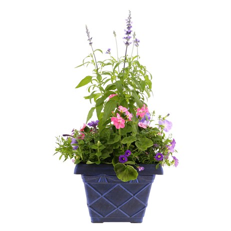 Planted Tuscan Decorative Square 31cm Outdoor Bedding Planter