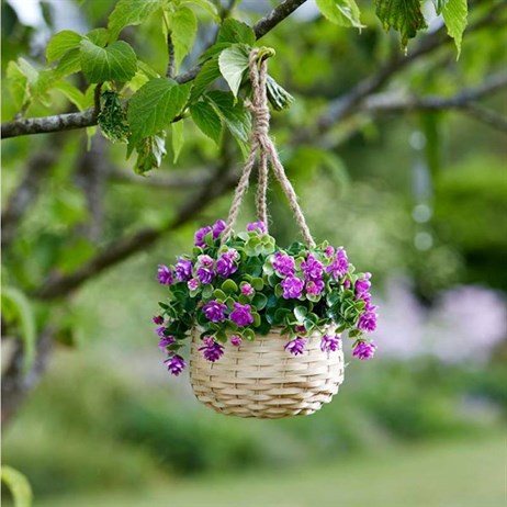 Smart Garden Basket Bouquet - Purple (5040055)