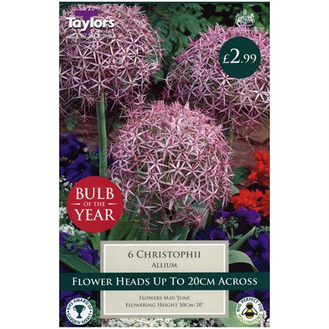 Taylors Bulbs Allium Christophii - Pack of 5 (TP691)