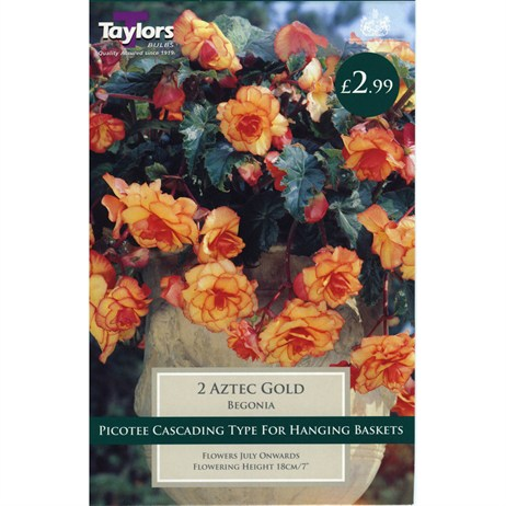 Taylors Bulbs Begonia Aztec Gold Exotic (2 Pack) (TS242)