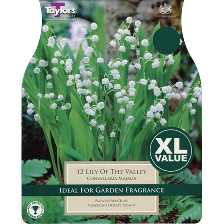 Taylors Bulbs Convallaria Majalis (Lily Of The Valley) (5 Pack) (TS831)
