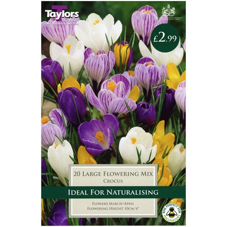 Taylors Bulbs Crocus Mixed - Pack of 15 (TP655)