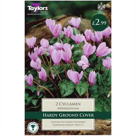 Taylors Bulbs Cyclamen Hederifolium (Neapolitanum) (2 Pack) (TS727)