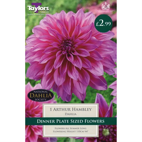 Taylors Bulbs Dahlia Arthur Hambley (Single Pack) (TS459)
