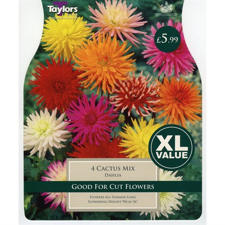 Taylors Bulbs Dahlia Cactus Mixed (4 Pack) (XL541)