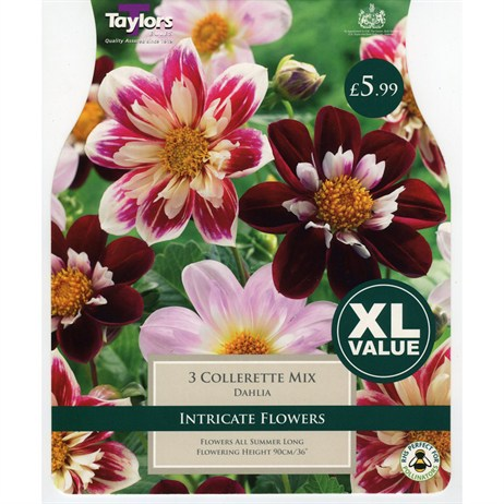 Taylors Bulbs Dahlia Collerette Mixed (3 Pack) (XL539)