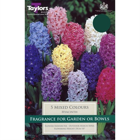 Taylors Bulbs Garden Hyacinth Mixed - Pack of 6 (TP622)