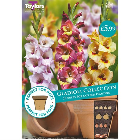 Taylors Bulbs Gladioli Collection (25 Pack) (SPPA02)