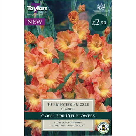 Taylors Bulbs Gladioli Princess Frizzle (10 Pack) (TS158)