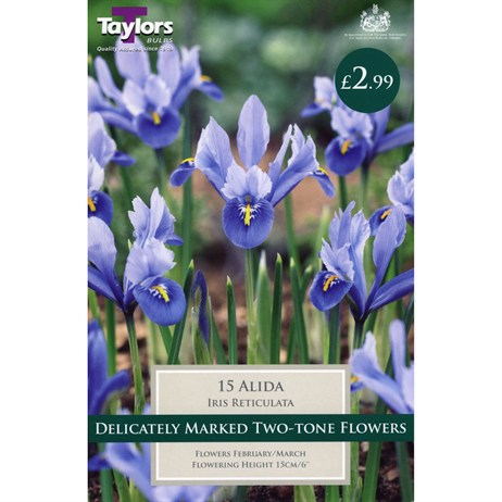 Taylors Bulbs Iris Dwarf Alida - Pack of 15 (TP928)