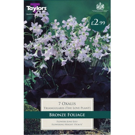Taylors Bulbs Oxalis Triangularis (The Love Plant) (7 Pack) (TS777)