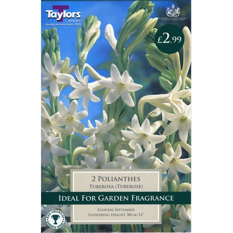 Taylors Bulbs Polianthes Tuberosa (Tuberose) (2 Pack) (TS785)