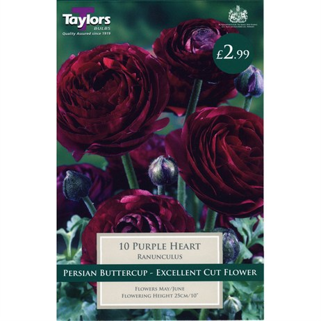 Taylors Bulbs Ranunculus Purple Heart (10 Pack) (TS786)