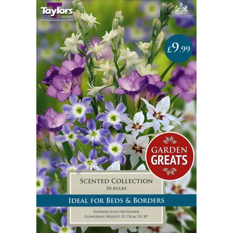 Taylors Bulbs Scented Collection (50 Pack) (SV305)