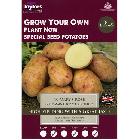Taylors Bulbs Seed Potatoes Mary's Rose Main Crop (Pack of 10) (VP481)