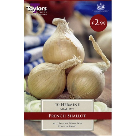 Taylors Bulbs Shallot Hermine (10 Pack) (VP385)