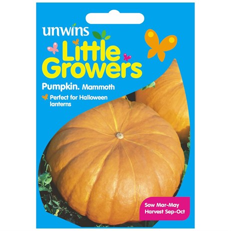 Unwins Seeds Little Growers Pumpkin Mammoth (30510023) Seeds for Kids