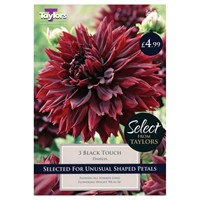 Taylors Bulbs Dahlia Black Touch (3 Pack) (SSE132)